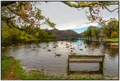 Bench with a view! (steve.gombocz) Tags: ngc landscape sceneryshooting simplylandscapes cumbria westcumbria colour colours color colourmania natureisbeautiful lakedistrict lakedistrictuk out outandabout outdoors landscapephotos landscapephotography landscapephotographs water reflections reservoir scenery landscapescenes mountain hill fell crag scree derwentwater catbells nature bird geese tree bush lakescene landscapepicture nicelandscape flickrlandscape flickrscenery explorelandscape explorescenery explorelakes lakes green bench seat nikon nikkor nikonusers nikond810 nikoneurope nikoncamera nikonfx nikon2401200mmf40 goose
