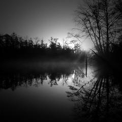 (a.pierre4840) Tags: olympus om2n zuiko 24mm f28 35mmfilm ilford ilfordfp4 fp4 bw blackandwhite monochrome noiretblanc 11 squareformat river riverthames mist fog sunrise reflections trees symmetry