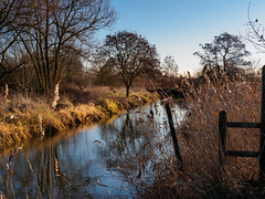 River Wey at Broad Meads Woking-E1170052 (tony.rummery) Tags: contrajour em10 landscape mft microfourthirds nationaltrust omd olympus reflections riverbank riverwey surrey water woking england unitedkingdom gb