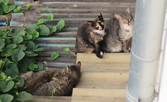 Cats of Porto (VIII) (Elisa1880) Tags: cat cats katten kat poes porto portugal animal pet dier huisdier
