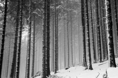 Trees (mitch6778) Tags: foret montagne vosges hiver neige alsace bois