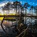 Swamptree