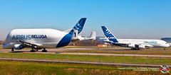 AIRBUS A380-841 (MSN 001) - AIRBUS A300B4-608ST N°1 (MSN 655) (PHOTOGRAPHE31 F-EGUT) Tags: beluga fgsta msn655 aeroport toulouse blagnac airport avgeek aviation plane aircraft airbus fly planespotter aerophotography photography outside canon lfbo airbus tls a300b4 super transporteur 608st a300 b4 numero 1 a380 rr fwwow
