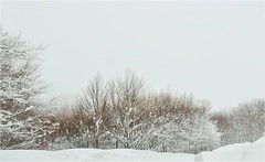 Half dressed (PattyK.) Tags: vasilitsa grevena greece grecia griechenland makedonia macedonia winter jaunuary 2019 nikond3100 snapseed snow cold mountain nature βασιλίτσα γρεβενά μακεδονία ελλάδα χειμώνασ ιανουάριοσ χιόνι βουνό φύση trees
