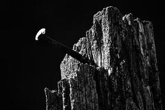 DFL_8075-01-01 (MILESI FEDERICO) Tags: milesi milesifederico milesifedericofoto federicomilesifoto valsusa valdisusa visitpiedmont valliolimpiche valledisusa visititaly visitvaldisusa piemonte piedmont inmontagna nikon nikond7100 nital iamnikon italia italy europa europe altavallesusa altavaldisusa alpi alpicozie alps alpes salbertrand parconaturalegranbosco parconaturale parchialpicozie 2018 bianconero bw biancoenero blackandwhite monocromatico