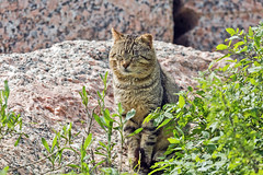 Feral Cat (noblesgeorge1) Tags: