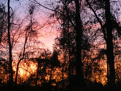 Evening Sunset. (dccradio) Tags: lumberton nc northcarolina robesoncounty outdoor outdoors outside nature natural sunset evening eveningsky february winter goodevening saturday saturdaynight saturdayevening canon powershot elph 520hs tree trees treebranch treebranches branch branches treelimb treelimbs beauty scenic woods forest wooded settingsun eveningcolors daylightends eveningbegins silhouette