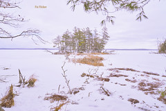 022752a View From The Island Trail (David G. Hoffman) Tags: island winter trees snow framed wetlands