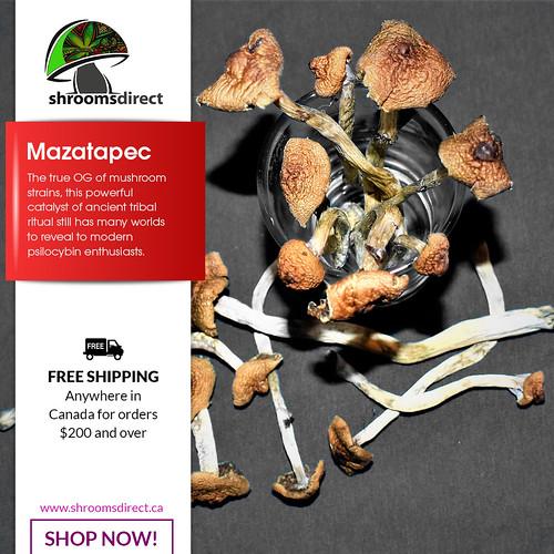 Flickriver: Colorado Mushrooms pool