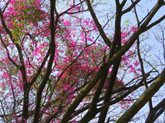 IMG_0121 (mohandep) Tags: iimb events birding nature wildlife flowers insects butterflies trees plants ugs aircraft