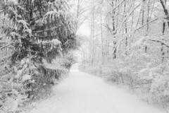 snow white out (sherry landon non stop creations) Tags: snow trees path walk forest hawthorne park sherry landon non stop creations