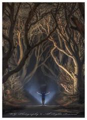 """Through the light"" (W.G. Photography) Tags: dark hedges countyantrim northernireland uk landscape lights natural trees"