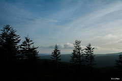 Atop a tree top. (Lee1885) Tags: trees mold wales moelfammau spruce mountains sky