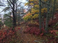 colorful intimations of cold winter's coming (77ahavah77) Tags: fall colors path trail way outside landscape nature memories remembering winter autumn change transformation seasons trees forest leaves