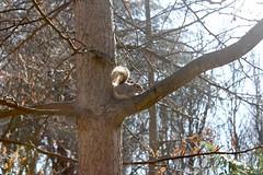 Squirrel. (jessica.aieta) Tags: canon1300d canon nature photo pic like park squirrel