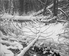 Into the Woods #01 (azhukau) Tags: forest woodland nature winter season snow creek treetrunk deadwood cold tree branches buschpressman modeld schneiderkreuznach xenar13547 rollfilm ilford delta100 6x7 wood landscape outdoors canada ontario