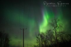 190306161656-4725 (shannbil (Signature Exposures)) Tags: aurora auroraborealis aurorahunters finland esaevents