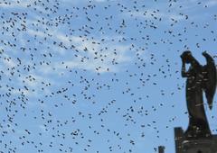 Plague (carlos_ar2000) Tags: abeja bee enjambre swarm estatua statue dof insecto insect bug calle street buenosaires argentina naturaleza nature