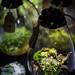 Plants in lit glass vessels by Insane Habitats