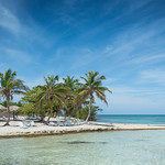 Palm Trees at Cayo Iguana thumbnail