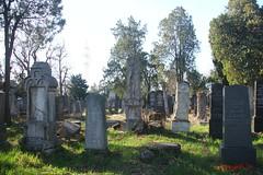 IMG_8265 (Pfluegl) Tags: wien vienna zentralfriedhof graveyard europe eu europa österreich austria chpfluegl chpflügl christian pflügl pfluegl spring frühling simmering