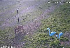 Bird Cam Alarm Message (Roberts Texas Bird Feeder Cam) Tags: roberts quinlan texas txbird feeder cam camera 75474