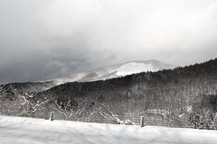 Winter wanderland (Elios.k) Tags: horizontal outdoors nopeople forest road coveredinsnow trees roadtrip driving roadcoveredinsnow nature frozen cold winter snow snowing weather snowcovered white view mountains hakkodamountains michinokuroad sky cloud cloudy fence shadow branches colour color travel travelling december2017 vacation canon 5dmkii photography hachinohe aomori aomoriprefecture tōhokuregion tohoku honsu asia japan