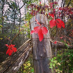 Red on Post (kathys444) Tags: