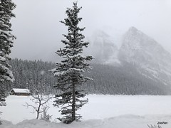 Lake Louise December (Jeannine DW) Tags: lakelouise snow winter canadianrockies trees mountains