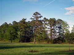 Trees In The Distance. (dccradio) Tags: lumberton nc northcarolina robesoncounty outdoor outdoors outside nature natural park citypark raymondbpenningtonathleticcomplex penningtonathleticcomplex northeastpark april weekend saturday saturdaynight saturdayevening evening goodevening spring springtime hp hewlettpackard hpdsccb350 tree trees treebranch branch branches treebranches treelimb treelimbs sky eveningsky