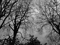 Спрут (v o y a g e u r) Tags: octopus white black noir nb bw blackwhite blackandwhite branches forest wood arboles arbres trees ветви лес черный деревья
