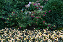 The Butchart Gardens, British Columbia, Canada (silkylemur) Tags: 24105mm america brentwoodbay britishcolumbia butchartgardens cmos canada canon canon5d canon5dmarkiii canonef24105mmf4lisusmlens canonef24105mmf4lisusm canoneos5dmarkiii canonlens color dslr ef eflens floraldisplaygarden flower flowers fullframe japanesegarden jenniebutchart lens northamerica professional robertpimbutchart slr thebutchartgardens theitaliangarden therossfountain tree trees vancouverisland victoria קנון كانون کانن カナダ キャノン キヤノン ブッチャート・ガーデン 佳能 北米 庭園 植物園 캐논