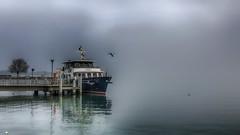 Brume sur le lac (Fred&rique) Tags: lumixfz1000 hdr hiver photoshop lac léman bateau brume eau oiseaux reflets gris paysage nature arbre ponton embarcadère