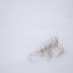 (jtr27) Tags: dscf5070xl jtr27 fuji fujifilm xt20 vivitar komine 55mm f28 macro manualfocus marsh maine minimal minimalism square sedge