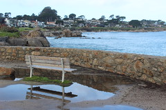 IMG_9768 (mudsharkalex) Tags: california pacificgrove pacificgroveca loverspointpark bench