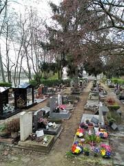 LES PRIMEVERES (marsupilami92) Tags: frankreich france îledefrance 92 hautsdeseine asnièressurseine cimetière îlerobinson fleur