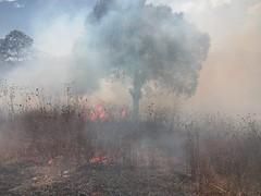 ProtecciónCivil y policía municipal de Tlaxiaco en coordinación con la brigada de CONAFOR trabajaron para sofocar incendio forestal en el paraje Palo Santo, Tlaxiaco