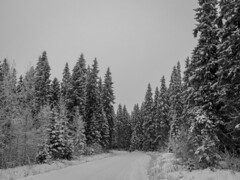 Forest high way no2  #Finland #nature #forest #trees #road #way #winter #snow #cold #white #blackandwhite #bnw #bnwphotography #bnw_captures #bnwmood #bnw_life #bnw_planet #bnw_greatshots #monochrome #outdoors #photography #olympus #travel #traveling #vis (Zilvinas Degutis) Tags: forest visiting olympus winter cold trees bnwlife white blackandwhite road bnwgreatshots bnwcaptures nature bnw traveling instago way instatravel bnwplanet outdoors bnwmood snow finland monochrome bnwphotography travel photography