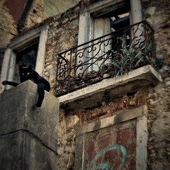 It's my place (Ormio) Tags: cat ruin rom house abandoned
