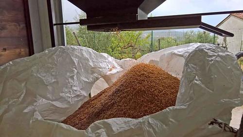 DryWaste-olive husk