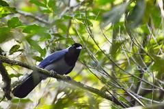 Cuenca del río Guatiquia (jhonfredyravesalazar) Tags: birds pajariar colombia meta villavicencio nikon sigma avistamiento