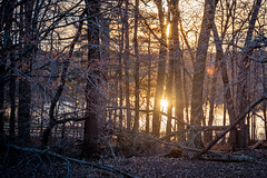 Sun Setting Through the Trees (John Brighenti) Tags: outdoors outside nature rachel carson conservation park woods forest montgomery county alone solitude hiking trail recreation out spring weather air sky hills sunset reflection dusk evening nightfall night goldenhour orange red yellow brown tree trees trunks bark sony alpha a7rii ilce7rm2 nex ilce emount femount tamron 2885mm zoom wide lens