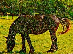 April Showers (Dee Gee fifteen) Tags: aprilfoolsday doubleexposure horse grass field humor fence bigbert hss sliderssunday