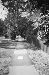 I love footpaths (Matthew Paul Argall) Tags: hanimex35es fixedfocus focusfree 35mmfilm blackandwhite blackandwhitefilm kentmerepan100 100isofilm footpath