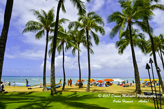OAHU-HAWAII_1D50657-01 (Donna Molinari Photography) Tags: sanjose ca usa