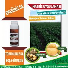 profert pats (Profert Gübre) Tags: patates soğan fertilizer profert gübre