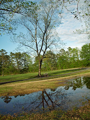 Tree Reflection. (dccradio) Tags: lumberton nc northcarolina robesoncounty outdoor outdoors outside nature natural park citypark raymondbpenningtonathleticcomplex penningtonathleticcomplex northeastpark april weekend saturday saturdaynight saturdayevening evening goodevening spring springtime hp hewlettpackard hpdsccb350 tree trees treebranch branch branches treebranches treelimb treelimbs sky eveningsky flood flooding floodwater floooded