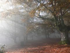 Udazkenaren koloreak/colores de otoño (azucena G. De Salazar) Tags: euskalherria euskadi basquecountri bizkaia forest paisvasco bosque basoa niebla lainoa fog