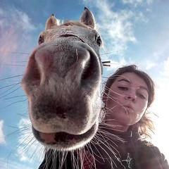 Sábado!!!! 😍🎉 Media luna os recibe a todos los jinetes y amazonas con una sonrisa!!!! 😁🐎 FELIZ FIN DE SEMANA!!!!! 😎🐴🎉 #endurancehorse #enduranceriding #horse #horseriding