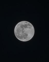 Full Moon - Super Moon (Tony Webster) Tags: minnesota superbloodwolfmoon tonywebster eclipse lunareclipse moon superblood supermoon wolfmoon eastlake unitedstatesofamerica us
